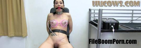 HuCows: Valentina Bianco - First training [FullHD/1080p/1.01 GB]